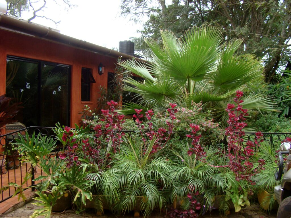 Lake View Studios - Gardens